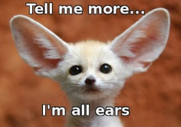 Listening-big eared animal
